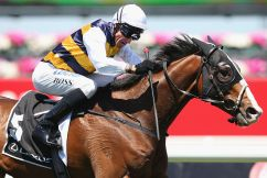 Glenn Boss says Sydney racing is 'pretty healthy at the moment'